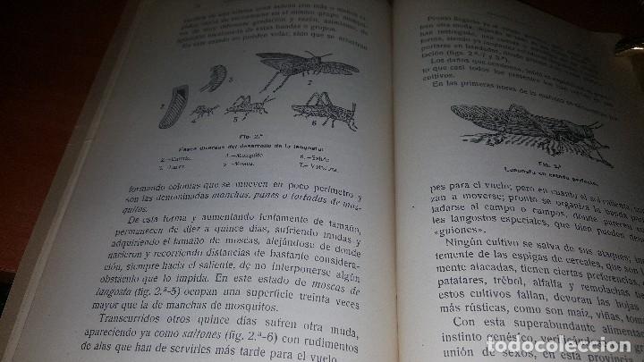 Libros antiguos: Memoria, trabajos de extincion de plagad del campo, est. Daños por pedrisco.. zaragoza 1921 - Foto 5 - 173567324