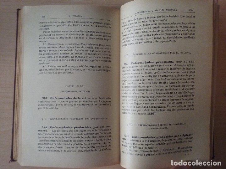 Libros antiguos: NOCIONES DE AGRICULTURA Y TÉCNICA AGRÍCOLA (1922) - DOCTOR MARIANO TORTOSA Y PICÓN - Foto 21 - 174233785