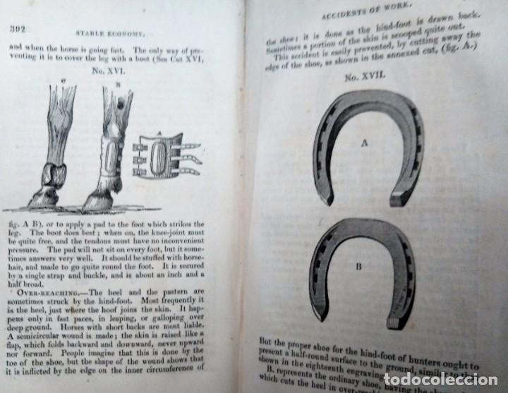 CABALLO LIBRO GUIA STABLE ECONOMY A TREASURY ON THE MANAGEMENT OF HORSES IN RELATIONSHIP TO STABLING (Libros Antiguos, Raros y Curiosos - Ciencias, Manuales y Oficios - Otros)