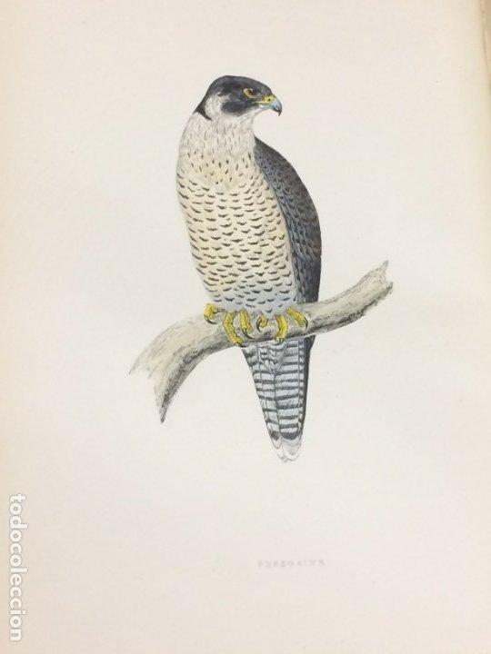 Libros antiguos: AÑO 1891 - MORRIS A history of british birds - 394 LITOGRAFÍAS PÁJAROS - AVES - Foto 3 - 176819707