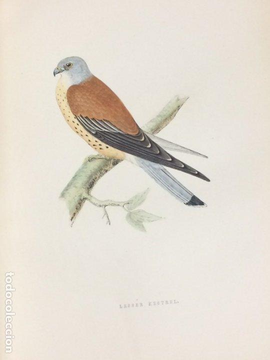 Libros antiguos: AÑO 1891 - MORRIS A history of british birds - 394 LITOGRAFÍAS PÁJAROS - AVES - Foto 4 - 176819707