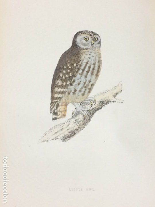 Libros antiguos: AÑO 1891 - MORRIS A history of british birds - 394 LITOGRAFÍAS PÁJAROS - AVES - Foto 5 - 176819707