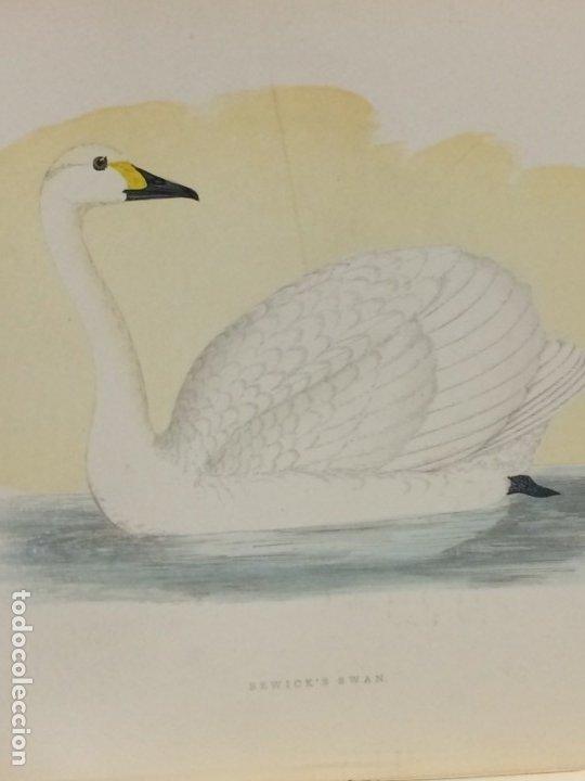 Libros antiguos: AÑO 1891 - MORRIS A history of british birds - 394 LITOGRAFÍAS PÁJAROS - AVES - Foto 6 - 176819707