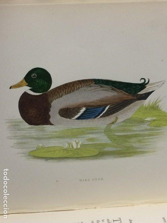 Libros antiguos: AÑO 1891 - MORRIS A history of british birds - 394 LITOGRAFÍAS PÁJAROS - AVES - Foto 7 - 176819707