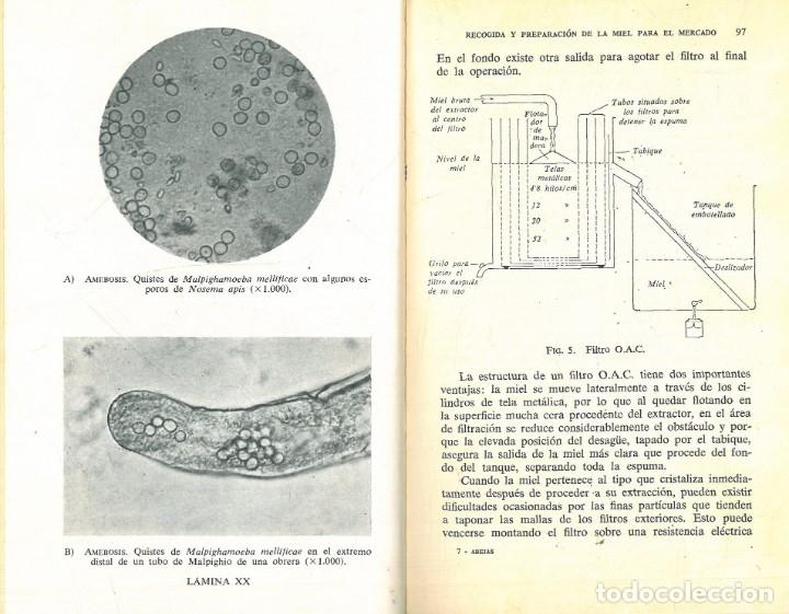 Libros antiguos: CRÍA DE LAS ABEJAS SU MIEL Y SUS ENFERMEDADES (A.G. HARRISON - A. HEBDEN - F.A. RICHARD) - Foto 6 - 195337693
