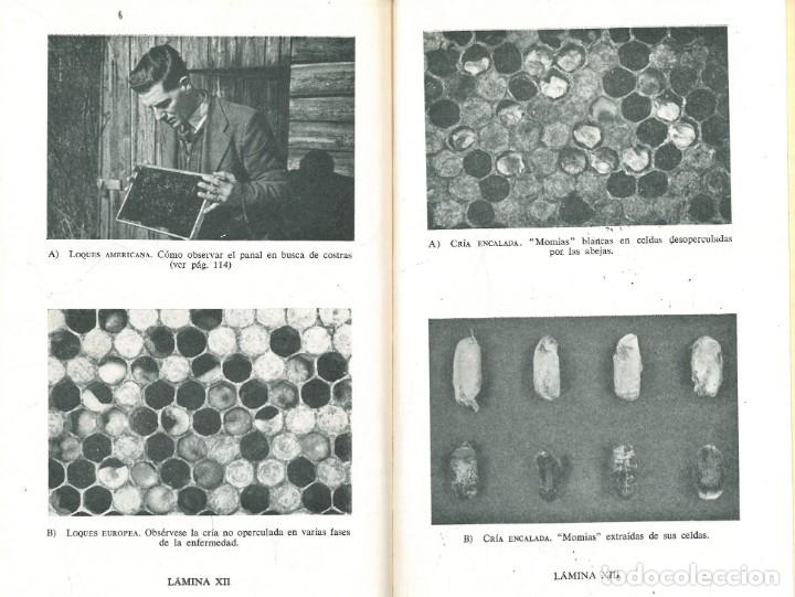 Libros antiguos: CRÍA DE LAS ABEJAS SU MIEL Y SUS ENFERMEDADES (A.G. HARRISON - A. HEBDEN - F.A. RICHARD) - Foto 7 - 195337693