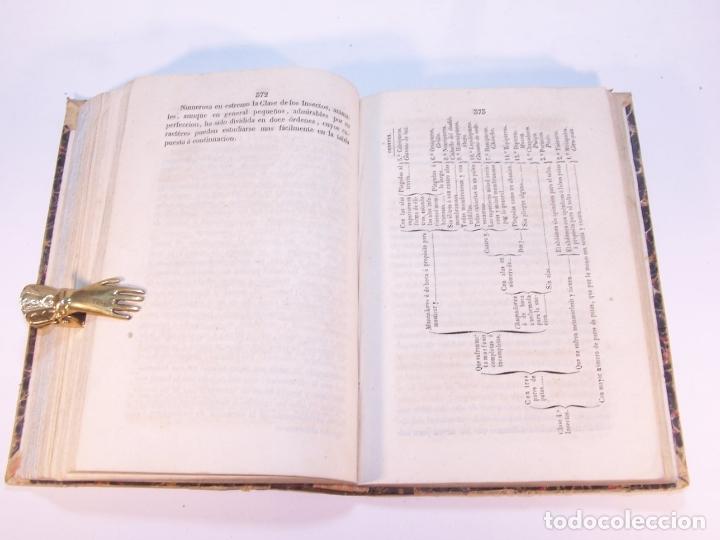 Libros antiguos: Manual de historia natural. D. Manuel María José de Galdo. Madrid. Imprenta de D.B.Gonzalez. 1849. - Foto 6 - 182291733