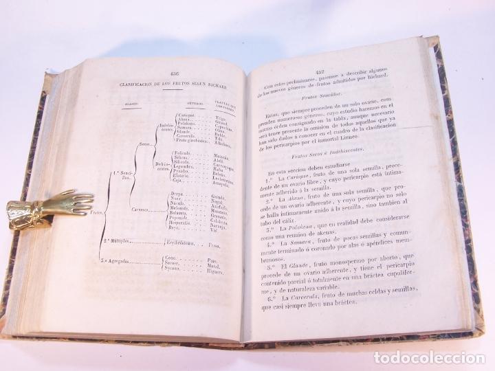 Libros antiguos: Manual de historia natural. D. Manuel María José de Galdo. Madrid. Imprenta de D.B.Gonzalez. 1849. - Foto 7 - 182291733