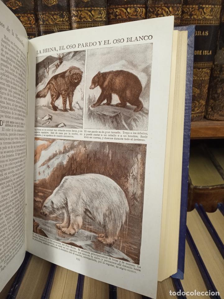 Libros antiguos: Colección Tesoro de la juventud. 17 tomos. Walter Jackson, Editor. Madrid. Suc. de Rivadeneyra. - Foto 13 - 182605790