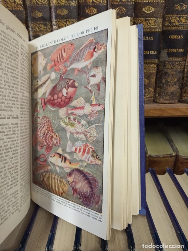 Libros antiguos: Colección Tesoro de la juventud. 17 tomos. Walter Jackson, Editor. Madrid. Suc. de Rivadeneyra. - Foto 14 - 182605790