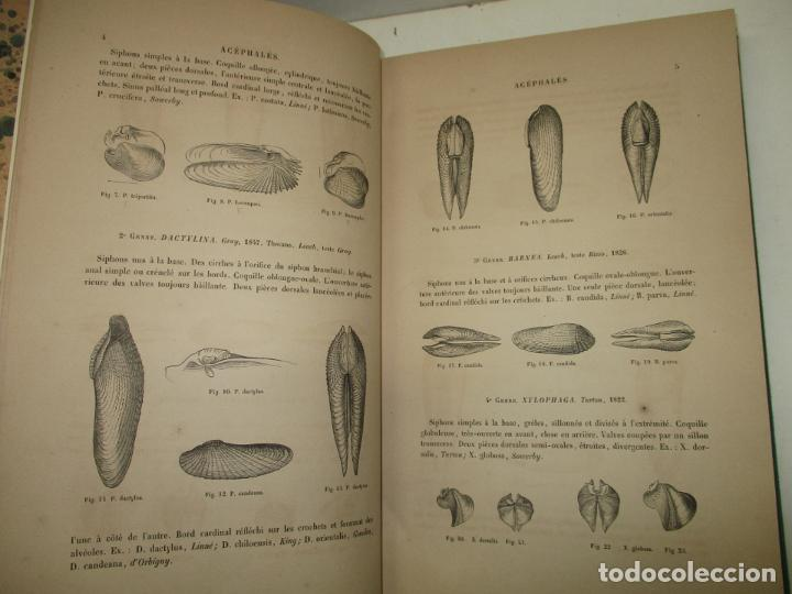 Libros antiguos: MANUEL DE CONCHYLIOLOGIE ET DE PALÉONTOLOGIE CONCHYLIOLOGIQUE. TOMO SEGUNDO. CHENU, Dr. J. C. - Foto 3 - 183701977