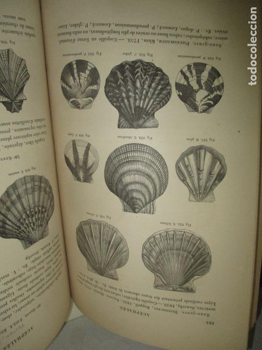 Libros antiguos: MANUEL DE CONCHYLIOLOGIE ET DE PALÉONTOLOGIE CONCHYLIOLOGIQUE. TOMO SEGUNDO. CHENU, Dr. J. C. - Foto 6 - 183701977