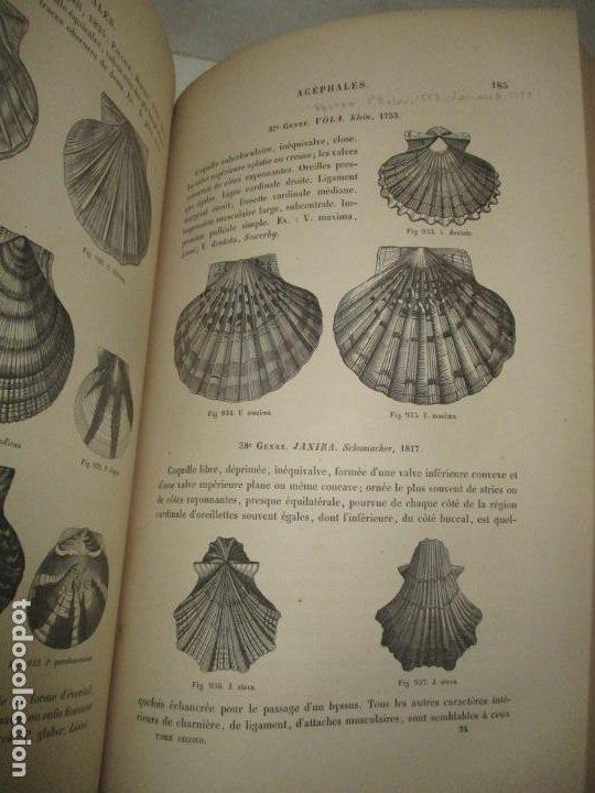 Libros antiguos: MANUEL DE CONCHYLIOLOGIE ET DE PALÉONTOLOGIE CONCHYLIOLOGIQUE. TOMO SEGUNDO. CHENU, Dr. J. C. - Foto 7 - 183701977