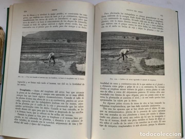 CEREALES DE PRIMAVERA (Libros Antiguos, Raros y Curiosos - Ciencias, Manuales y Oficios - Otros)