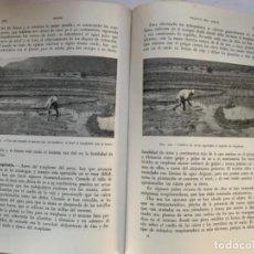 Libros antiguos: CEREALES DE PRIMAVERA. Lote 186082686