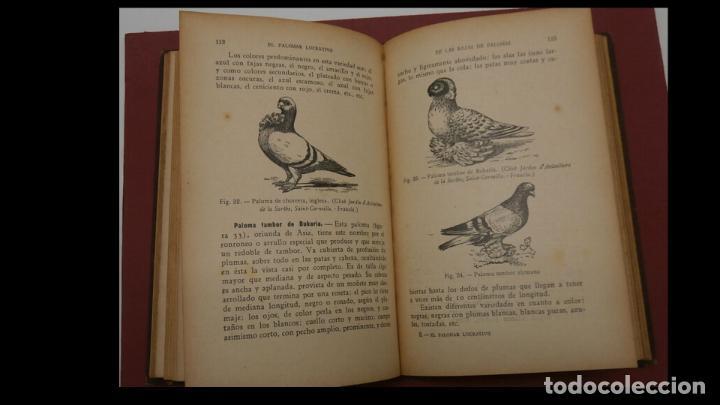 Libros antiguos: El palomar lucrativo. Tratado práctico de la explotación industrial de las palomas... A. Brillat - Foto 3 - 194884413