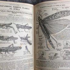 Libros antiguos: ALMANAQUE LELLO, 1935. ( HISTORIA, VIAJES, CIENCIA, PASATIEMPOS, CURIOSIDADES, ETC. ). ENVIO GRÁTIS. Lote 194889322
