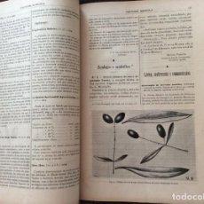 Libros antiguos: PORTUGAL AGRICOLA. REVISTA QUINCENAL DEDICADA A LOS INTERESES, PROMOCIÓN...1904. ENVIO GRÁTIS.. Lote 195050106