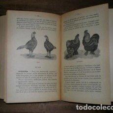 Libros antiguos: RUBIO M. Y VILLANUEVA, JUAN: AVICULTURA INDUSTRIAL. 1931. Lote 221652737