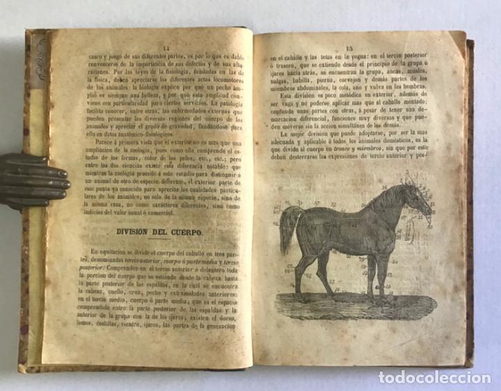 Libros antiguos: EXTERIOR DEL CABALLO Y DE LOS ANIMALES DOMÉSTICOS. - CASAS DE MENDOZA, Nicolás. - Foto 2 - 222016791