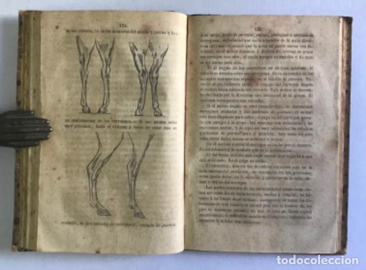 Libros antiguos: EXTERIOR DEL CABALLO Y DE LOS ANIMALES DOMÉSTICOS. - CASAS DE MENDOZA, Nicolás. - Foto 3 - 222016791