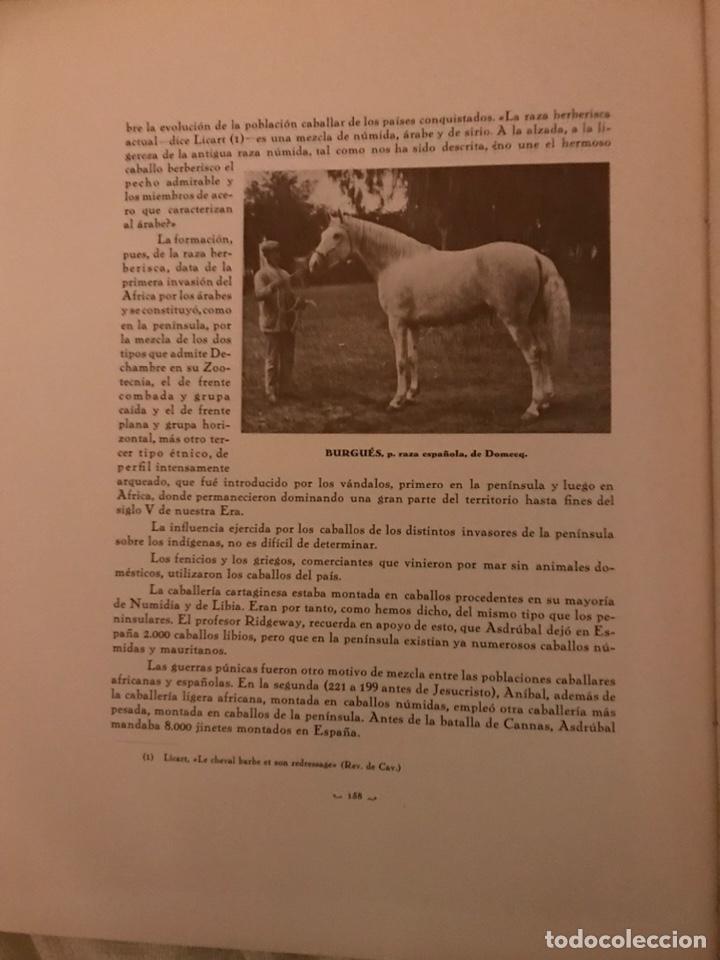 Libros antiguos: Recopilación de estudios de cría caballar por el marqués de Negrón y equitacion hipica caballos - Foto 8 - 112132702