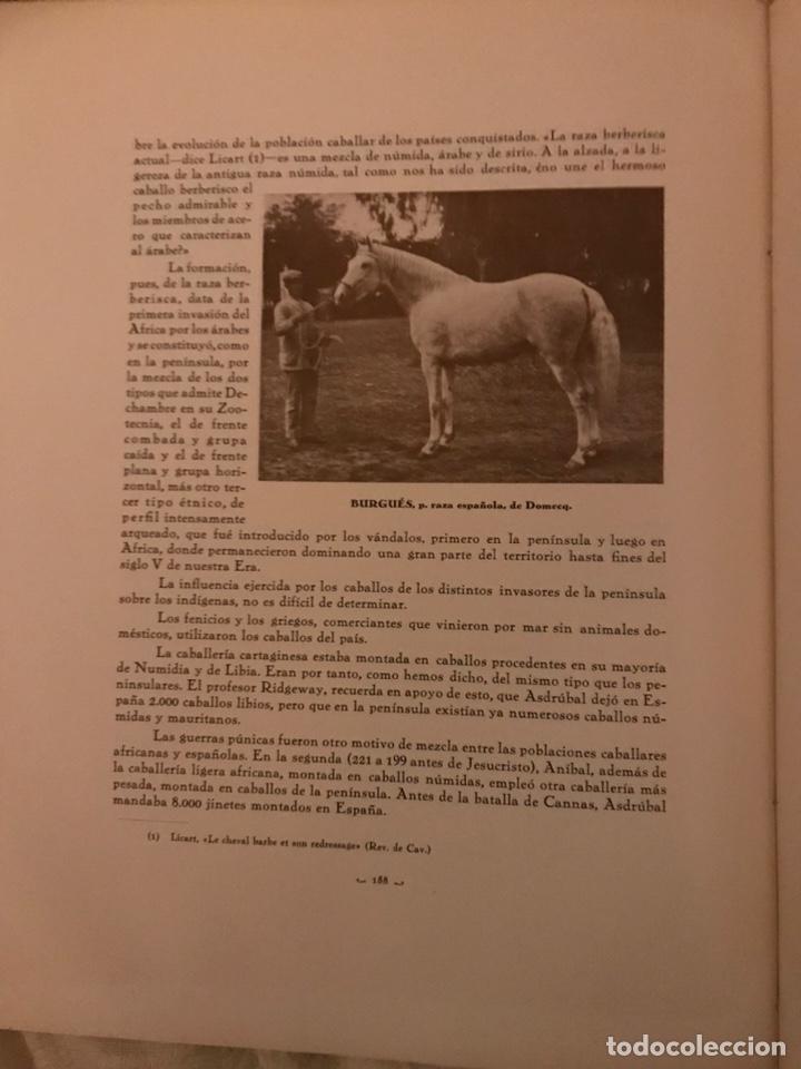 Libros antiguos: Recopilación de estudios de cría caballar por el marqués de Negrón y equitacion hipica caballos - Foto 9 - 112132702