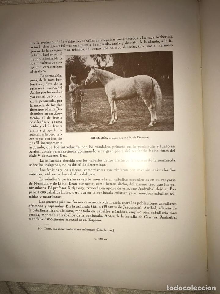Libros antiguos: Recopilación de estudios de cría caballar por el marqués de Negrón y equitacion hipica caballos - Foto 10 - 112132702
