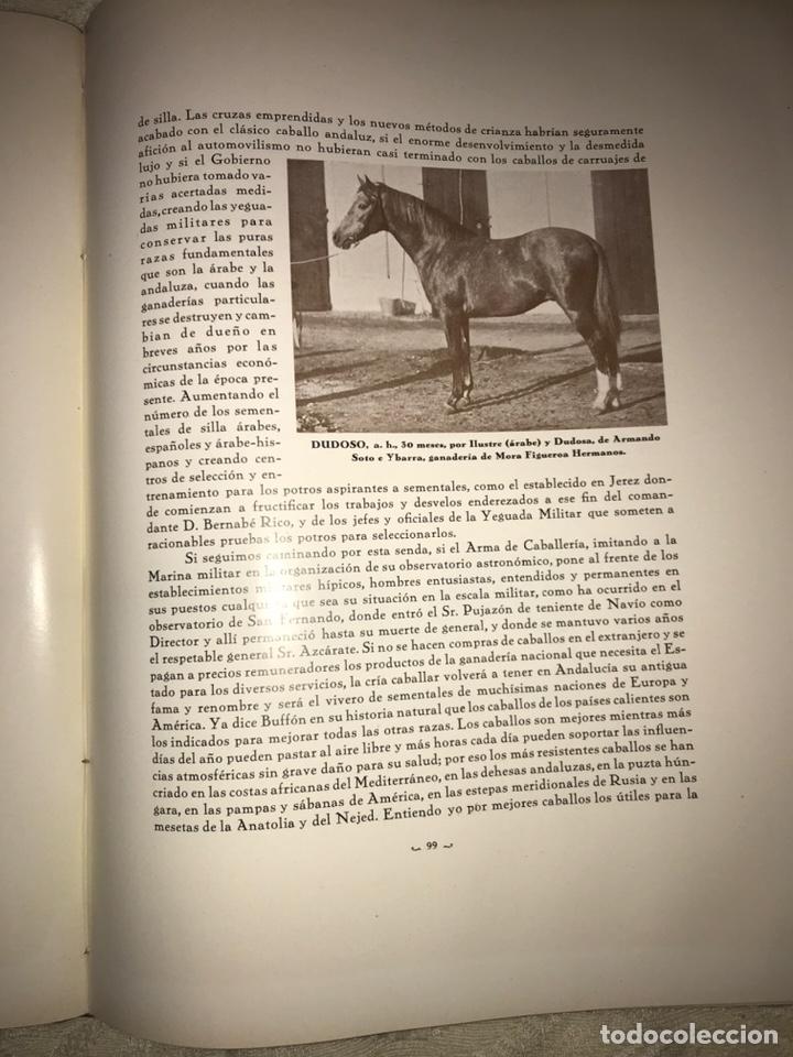 Libros antiguos: Recopilación de estudios de cría caballar por el marqués de Negrón y equitacion hipica caballos - Foto 12 - 112132702