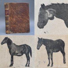 Libros antiguos: 1900 - PATOLOGIA QUIRURGICA - VETERINARIA - GRABADOS - CABALLOS -. Lote 270260838