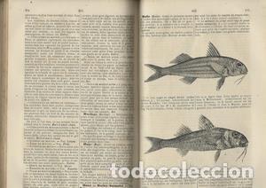 Libros antiguos: Le cuisinier et le medecin, et la medecin et le cuisinier. 2 tomos en 1 - LOMBARD L-M - Foto 5 - 276812808