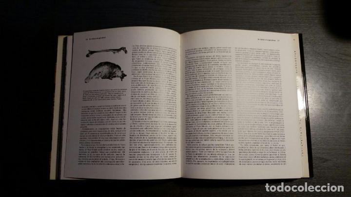 Libros: LOS ORÍGENES DEL HOMBRE - RICHARD E. LEAKEY / ROGER LEWIN - Foto 11 - 151873102