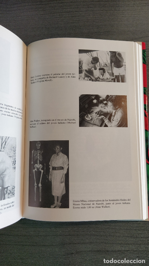 Libros: NUESTROS ORIGENES. RICHARD LEAKEY / ROGER LEWIN CRITICA - Foto 6 - 173865309
