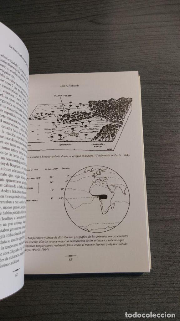Libros: Hominizacion. Buscando nuestras raices . Jose Valverde (Autor). CSIC. Editor: Quercus - Foto 6 - 178055634
