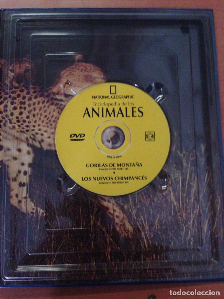 Libros: NATIONAL GEOGRAPHIC ENCICLOPEDIA DE LOS ANIMALES MAMIFEROS I LIBRO + DVD - Foto 2 - 135068750