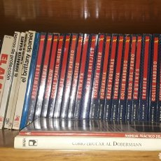 Livres: LOTE 40 LIBROS DE RAZAS CANINAS. GASTOS DE ENVÍO 15 €.. Lote 191428423