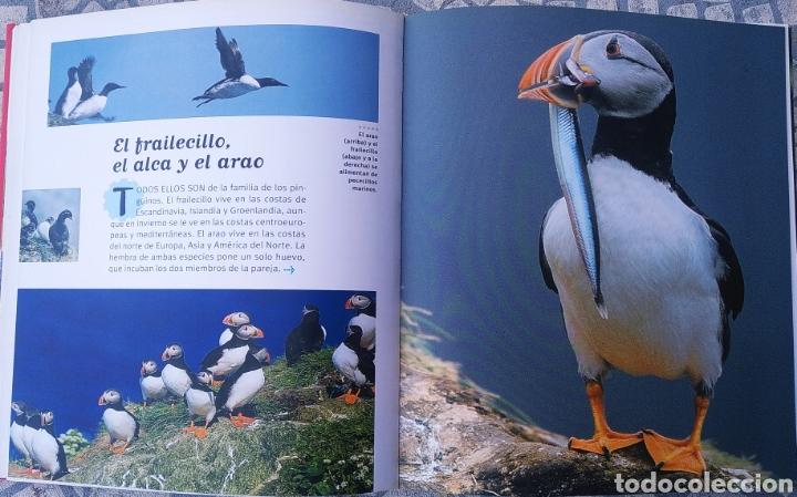 Libros: Libro, 250 curiosidades sobre los animales - Foto 5 - 222595533