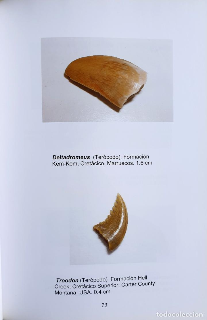 Libros: FENÓMENOS ASTROFISICOS Y LA EXTINCIÓN DE LOS DINOSAURIOS - Foto 3 - 169046684