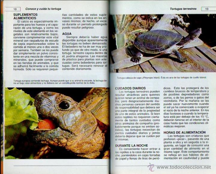 Libros: Conoce y cuida tu tortuga. Al David. Hispano Europea, 1ª edición, 2001 - Foto 2 - 262128640