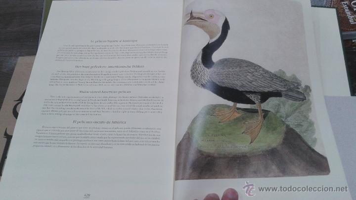 Libros: PRECIOSO VOLUMEN HISTORIA DE LAS AVES. PROFUSAMENTE ILUSTRADO CON LAMINAS. PRECINTADO. ED. ULLMANN. - Foto 6 - 48913844
