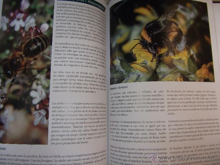 Libros: LA SERRA DE CREVILLENT , LA PRESERVACIÓN DEL MEDIO AMBIENTE , CREVILLENTE - ALICANTE. - Foto 10 - 52530431