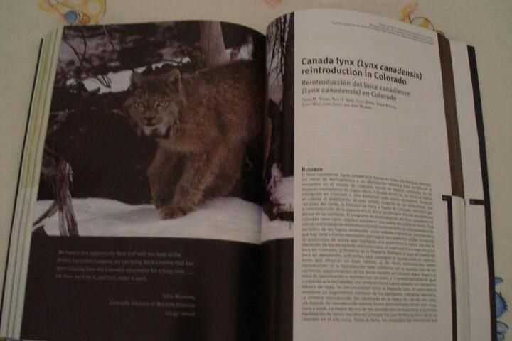 Libros: MANUAL. LIBRO. CONSERVACION EX SITU DEL LINCE IBERICO:UN ENFOQUE MULTIDISCIPLINAR. UNICO EN TC. LEER - Foto 4 - 98239011