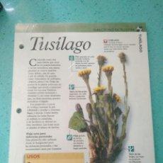 Libros: TUSILAGO,CULTIVO DE PLANTAS PLANETA AGOSTINI SIN ABRIR.COLECCION AZ. Lote 120424615