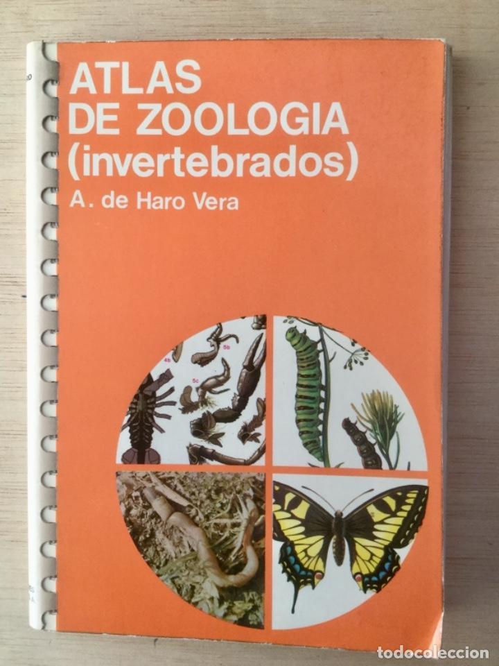 ATLAS DE ZOOLOGÍA. INVERTEBRADOS. JOVER. (Libros Nuevos - Ciencias, Manuales y Oficios - Biología)
