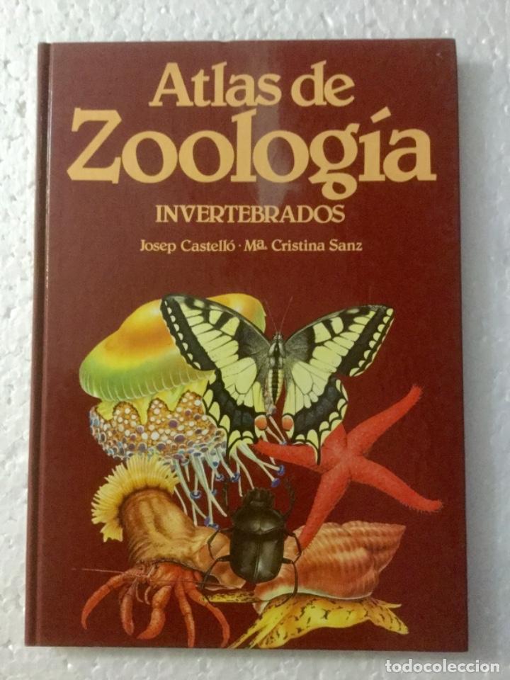 ATLAS DE ZOOLOGÍA (INVERTEBRADOS). J. CASTELLÓ. NUEVO (Libros Nuevos - Ciencias, Manuales y Oficios - Biología)
