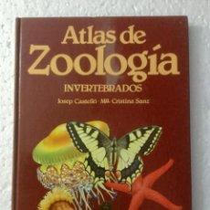 Libros - Atlas de Zoología (Invertebrados). J. Castelló. NUEVO - 153698094