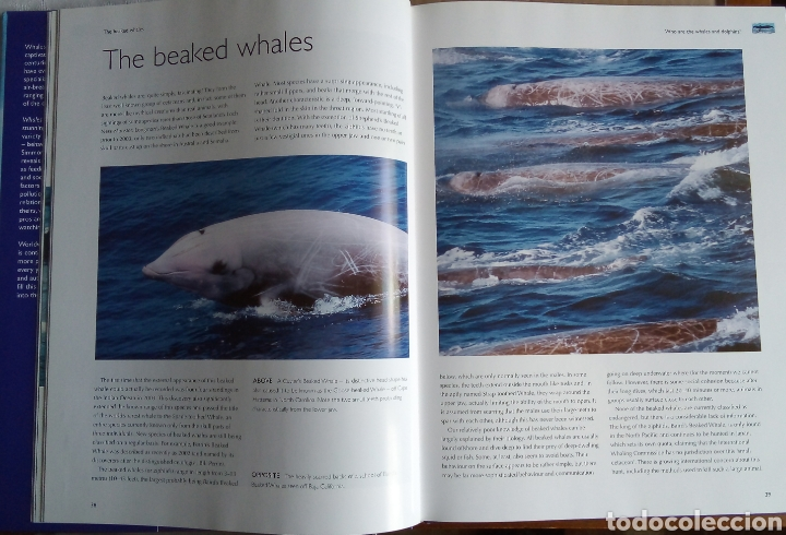 Libros: Mark Simmonds: Whales & Dolphins of the world - Foto 4 - 160667892
