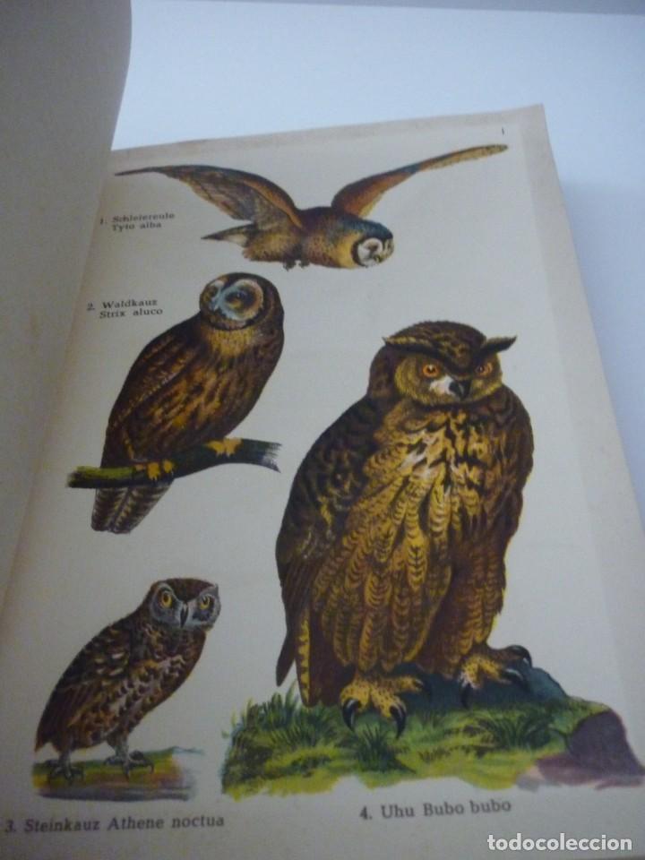 Libros: ATLAS DE BOLSILLO. AVES (1 ) Y ( 2 ). EDITORIAL ORBIS. 1955. IGNACIO DE SAGARRA - Foto 5 - 166673366