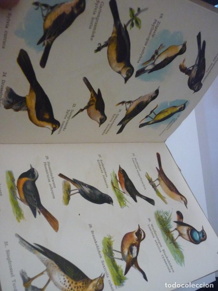 Libros: ATLAS DE BOLSILLO. AVES (1 ) Y ( 2 ). EDITORIAL ORBIS. 1955. IGNACIO DE SAGARRA - Foto 6 - 166673366