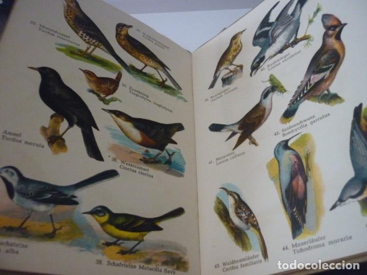 Libros: ATLAS DE BOLSILLO. AVES (1 ) Y ( 2 ). EDITORIAL ORBIS. 1955. IGNACIO DE SAGARRA - Foto 7 - 166673366